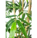 Kunstplant Bamboe 300 cm brandvertragend