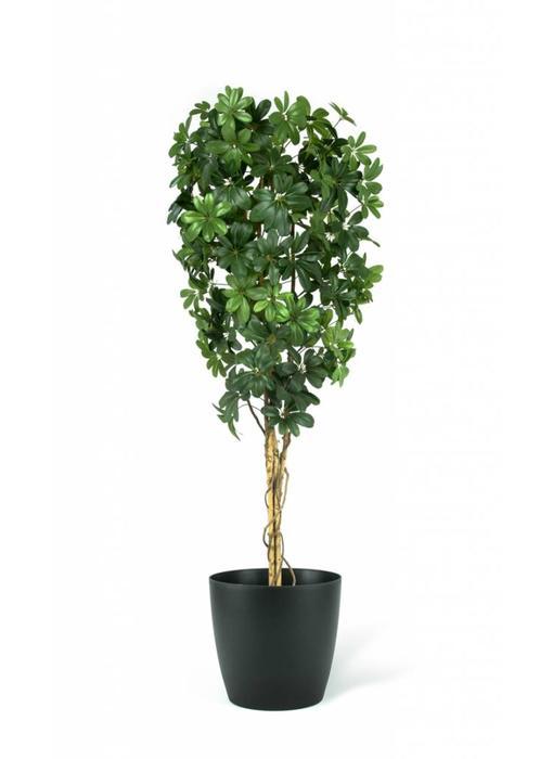 Kunstplant Baby Schefflera 210 cm