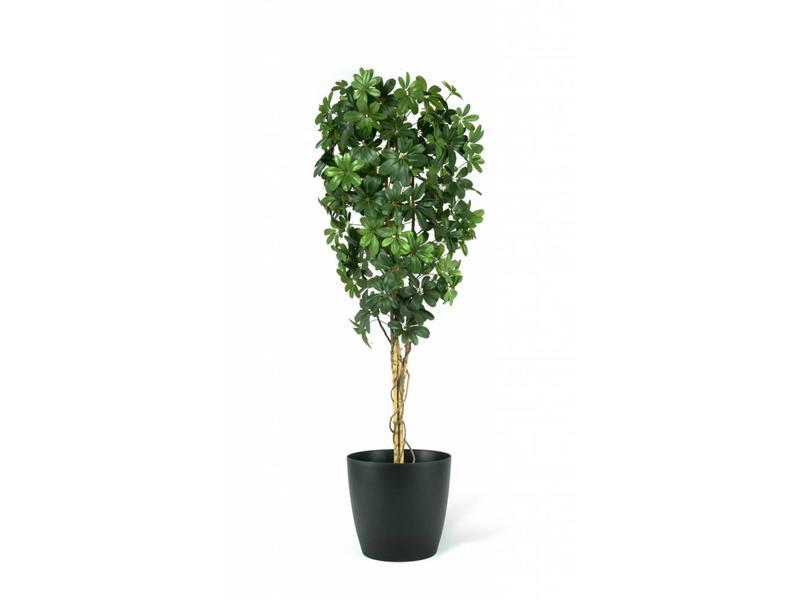 Kunstplant Baby Schefflera 2.10m