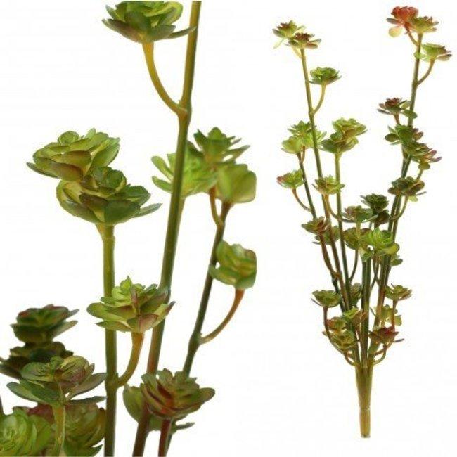 succulent plant green mini bush