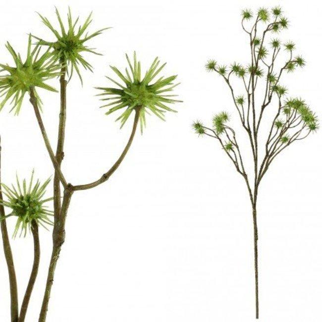 thistle plant brown pom pom spray