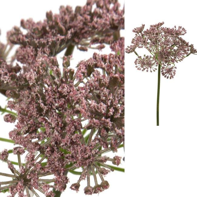 Bloem roze duizendkruid