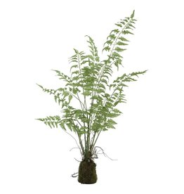 fern plant green asparagus grass bunck in clod M