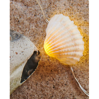 Shelly natueal shell/silver 20 leds