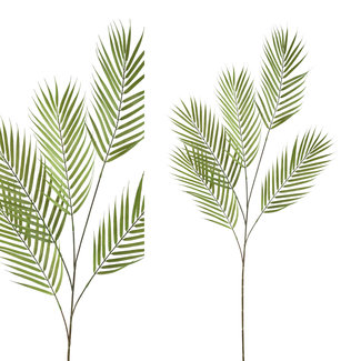 PTMD Leaves plant green Palm leaf