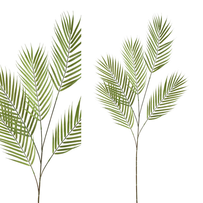 Leaves plant green Palm leaf