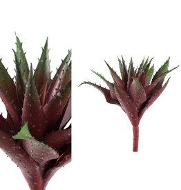 Succulent plant green/red aloe vera