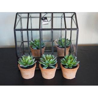 EDG Vetplant met terracotta vaasje