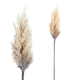 PTMD Twig plant light brown reed spray