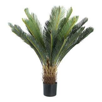 PTMD Tree green Palm tree in pot