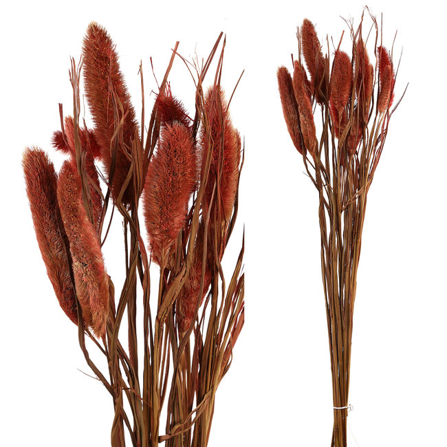 dried leaves red dwarf foutain grass