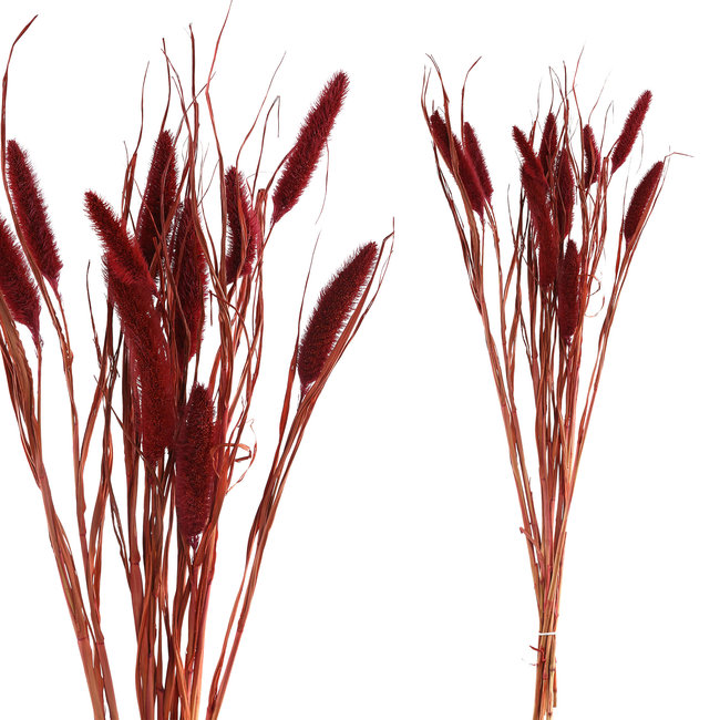 dried leaves pink dwarf foutain grass