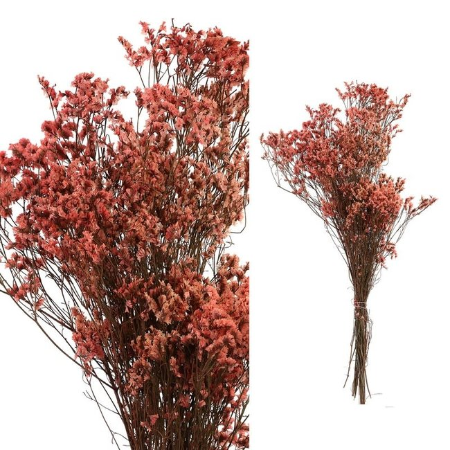 dried leaves pink natural grass bush