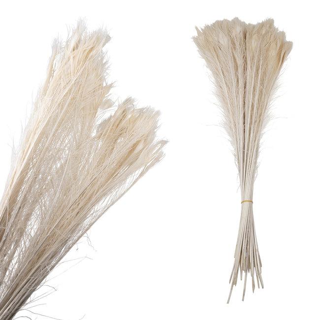 Dried flower witte pauwenveer