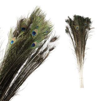 PTMD Dried flower natuurlijke pauwenveer