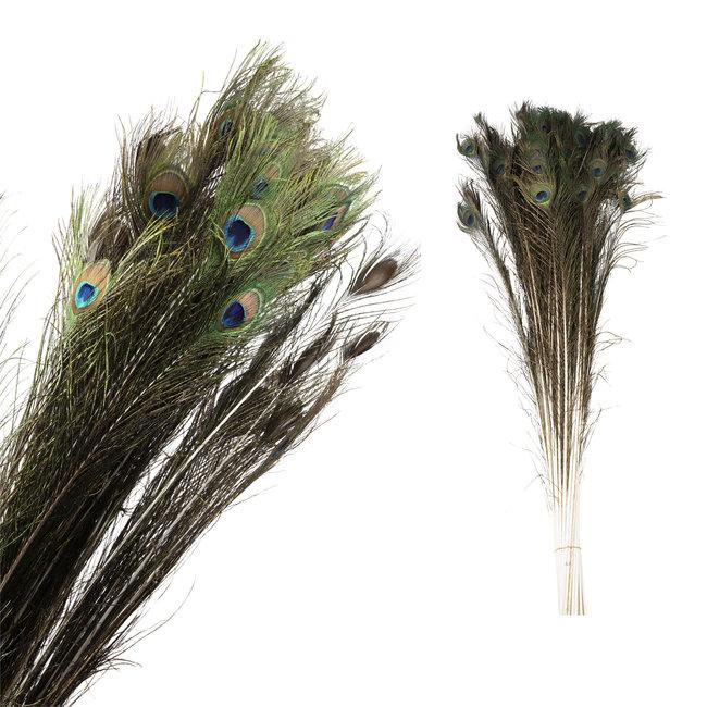 Dried flower natuurlijke pauwenveer