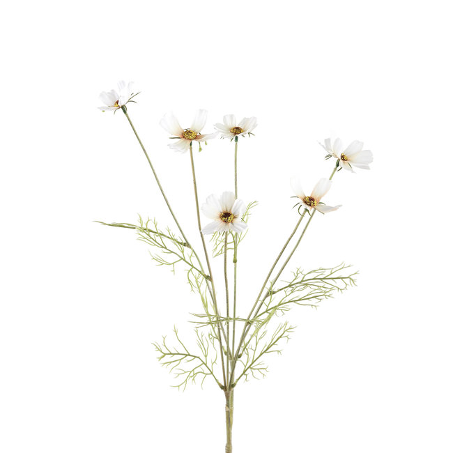 garden flower crème cosmea tak