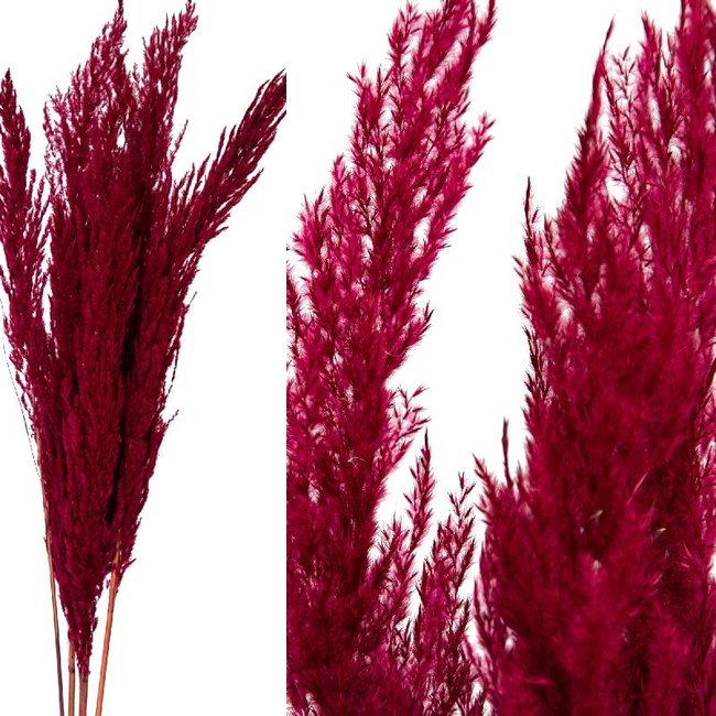 Dried flower paarse bos pampas gras 8pcs