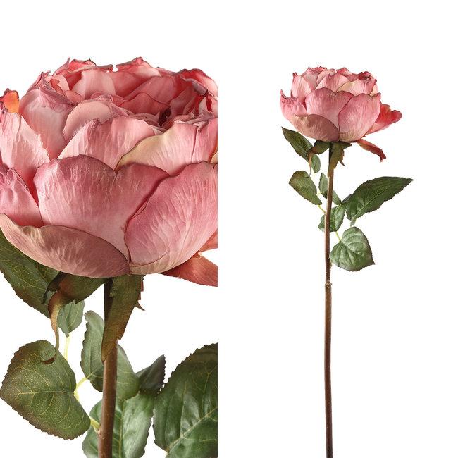 rose flower pink rose stem with leaves