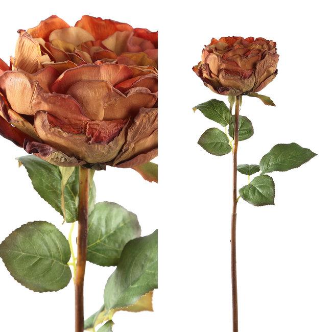 rose flower brown rose stem with leaves