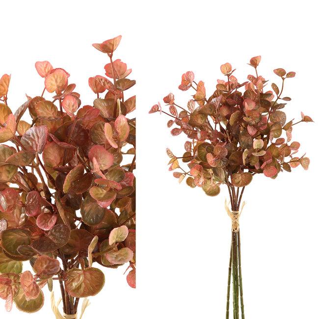 leaves plant orange eucalyptus bush