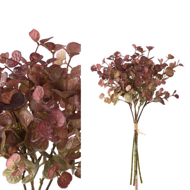 leaves plant purple eucalyptus bush