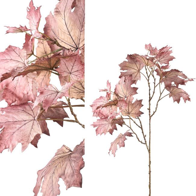 leaves plant light purple mapl leaves spray