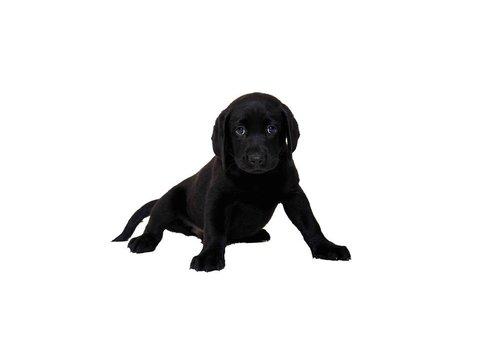 Hondenkussen