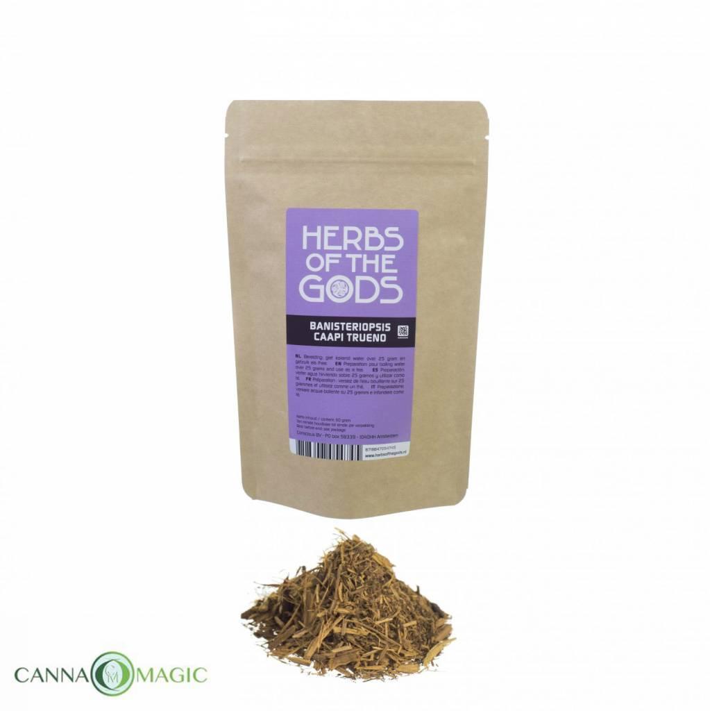 Herbs of the Gods - Banisteriopsis caapi - Trueno