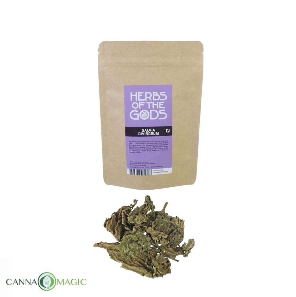 Herbs of the Gods - Salvia Divinorum