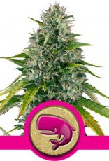 Royal Queen Seeds Royal Moby