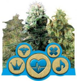 Royal Queen Seeds Medical CBD mix