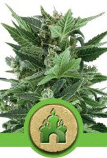 Royal Queen Seeds Royal Kush Automatic