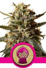 Royal Queen Seeds Bubblegum XL
