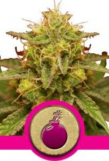 Royal Queen Seeds Royal Domina