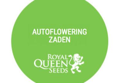 Autoflowering zaden
