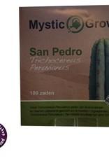 San Pedro (Trichocereus Peruvianus) zaden