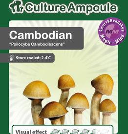 Culture Ampoule Set Cambodian Mushroom Spore
