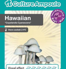 Culture Ampoule Set Hawaiian Mushroom Spore