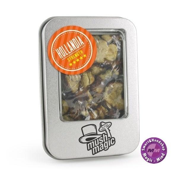Mush magic Hollandia Psilocybe 15 gram