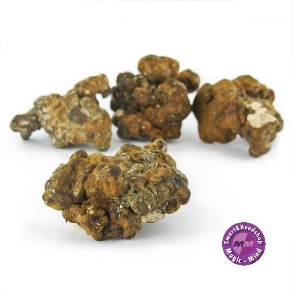 Hollandia Psilocybe Hollandia Psilocybe 15 gram