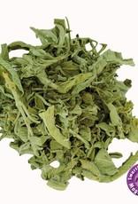 INDIAN ELEMENTS Salvia Divinorum Leaf - 10 gram