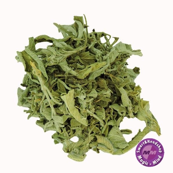 INDIAN ELEMENTS Salvia Divinorum Leaf