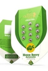 Royal Queen Seeds Haze Berry Automatic