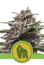 Royal Queen Seeds Royal Gorilla Automatic