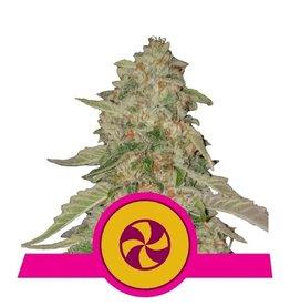 Royal Queen Seeds Sweet ZZ