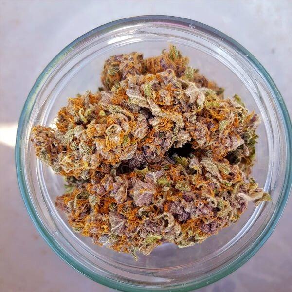 Royal Queen Seeds Purple Queen