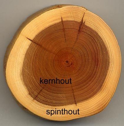 Voorbeeld Spinthout