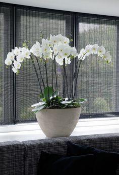 Witte Orchideeën in mooie schaal.