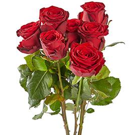 Red Naomi Rode rozen 60 cm lang